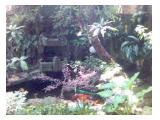 Taman + Kolam ikan